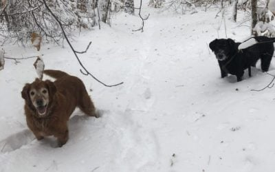 Rescue Dogs in Snow