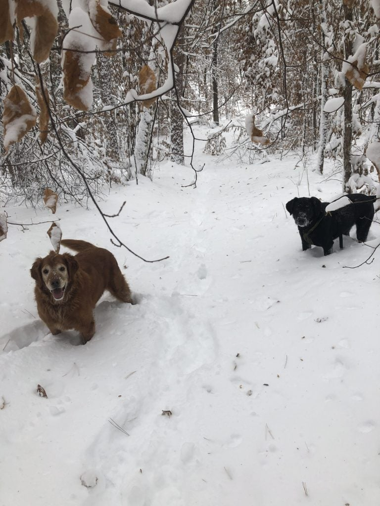 I am thankful for this winter wonderland of freshly fallen snow with my pups!